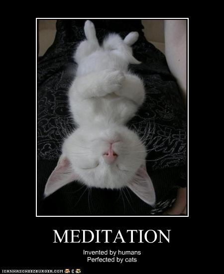 Funny Meditating Cat Pic
