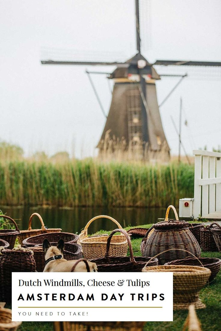the 5 best day trips from Amsterdam dutch windmills cheese tulips