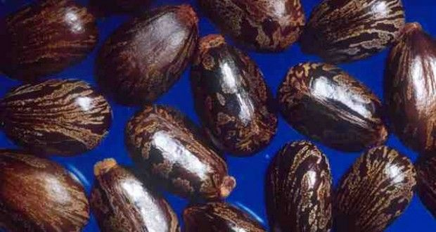 Jamaican Black Castor Oil Benefits: a Miracle for Hair and Skin - Oilypedia.com