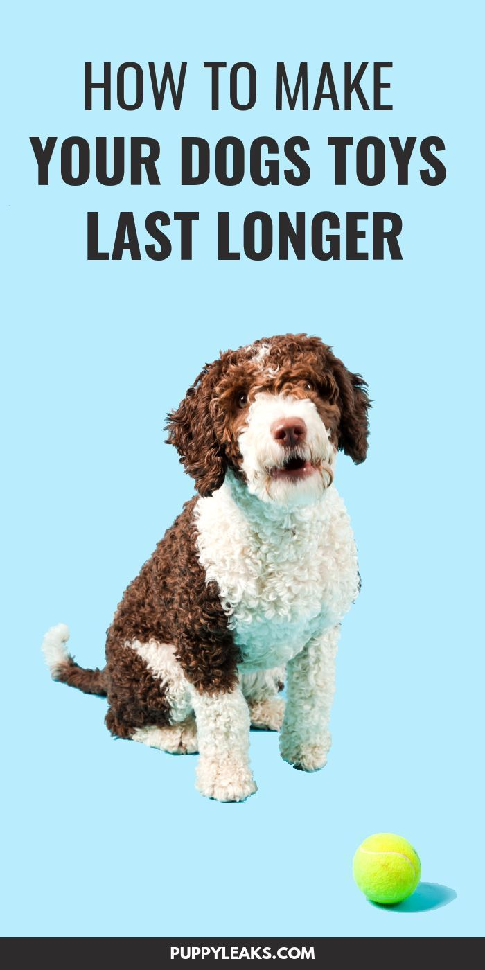 How To Make Your Dogs Toys Last Longer Best Dog Toys Dog Care