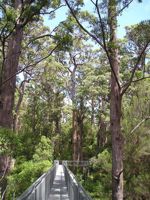 Denmark WA Tree Tops Walk, Australia