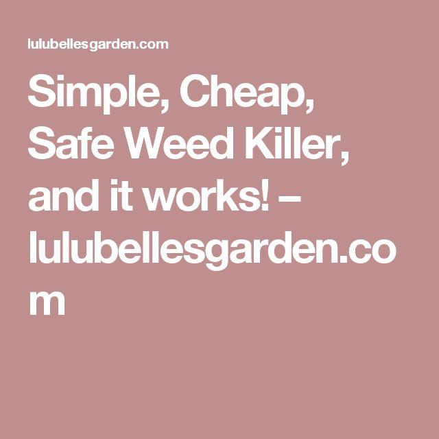 Simple, Cheap, Safe Weed Killer, and it works! – lulubellesgarden.com