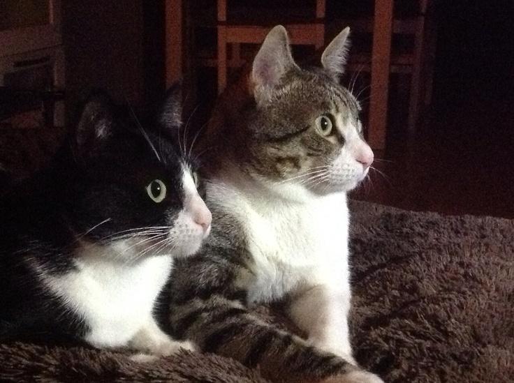 Pippa y Bruno