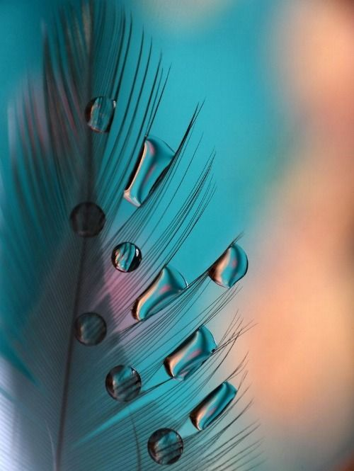 Turquoise / macro photography, nature, feather, droplets