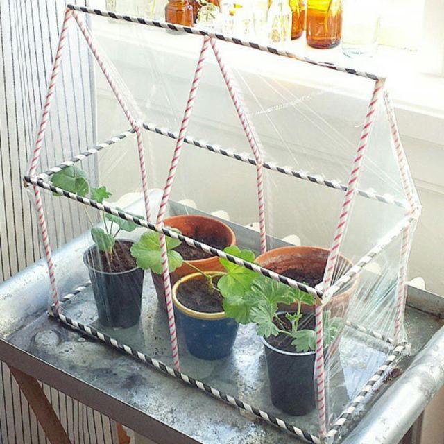 Växthus av sugrör och plastfolie