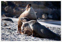 Sunning at Seal Bay