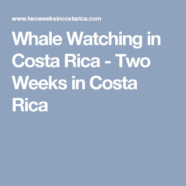 Whale Watching in Costa Rica - Two Weeks in Costa Rica