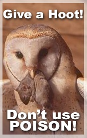 The African Bird of Prey Sanctuary Lesson plans -in the pipeline-