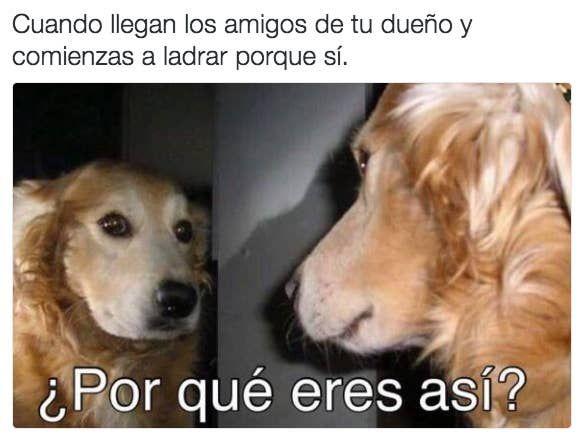 28 Memes De Perros Que Te Haran Derramar Lagrimas De Risa Memes Perros Imagenes Divertidas De Animales Humor Divertido Sobre Animales