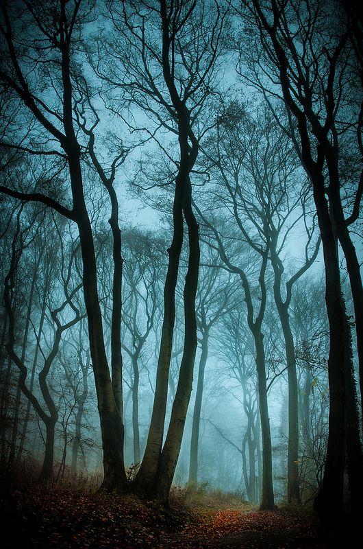 Trees. No way back ...