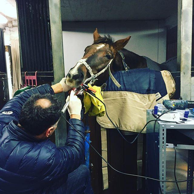 "@horsecompanion: ""Nettan with the horse dentist #horse #horsetooth #horsebackriding #horsesofinstagram #stables #horselove #selfie #stables #horses #horseshow #horsey #horsestagram #"""