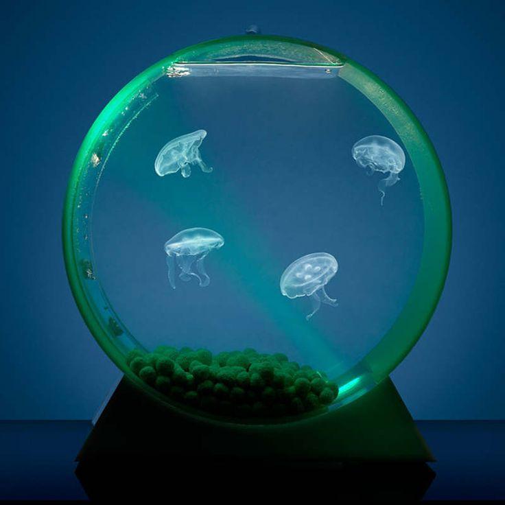 Own a jellyfish tank