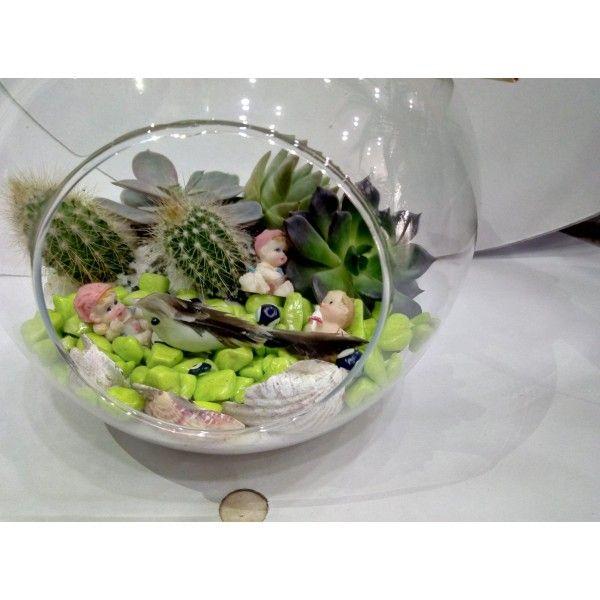 Sukulent - Saksı Çiçeği,  cam elma vazo - teraryum  Isparta teraryum gönderimi için lütfen bize ulaşın. +90 246 223 38 39