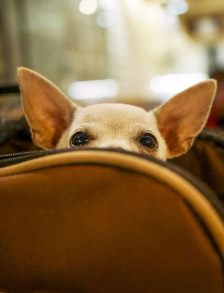 5 things you need to know about flying with pets http://www.cntraveler.com/stories/2015-11-11/5-tips-for-flying-with-pets