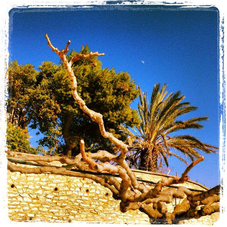 Pins et palmier