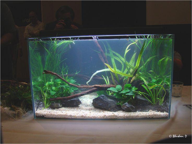160l aquascape hardscape aquarium pinterest aquariums from ...