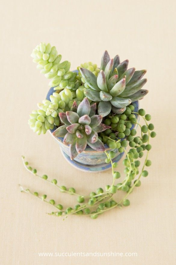 Use a trailing succulent to add more interest to your arrangement