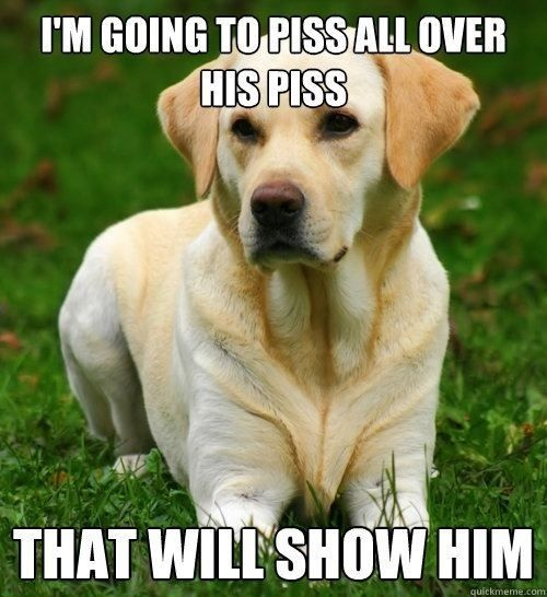 That will show him (dog,funny,meme)
