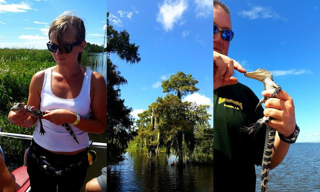 See ya later aligator Airboat adventures, Lafitte swamp Louisiana