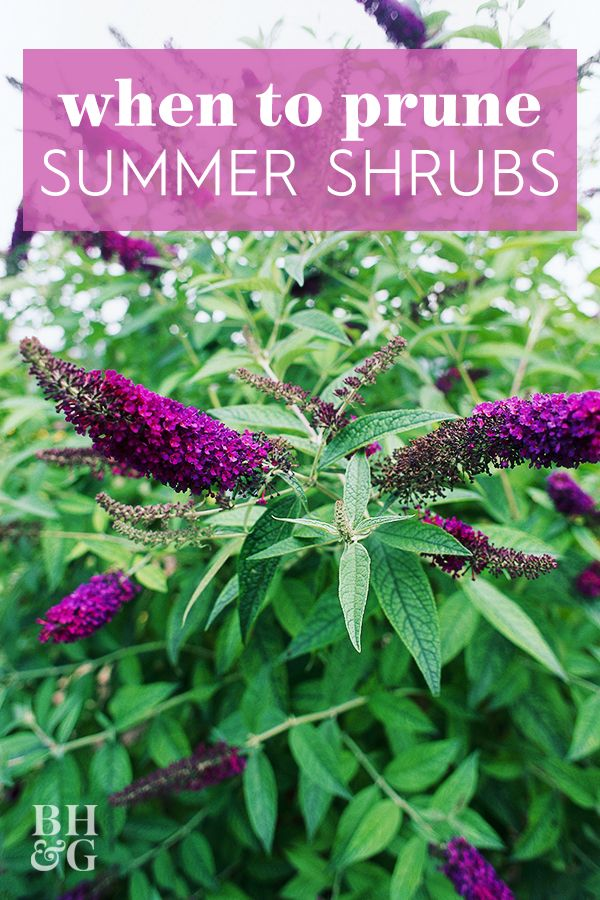 What To Prune When In Your Garden For The Healthiest Plants Plants Shrubs Prune