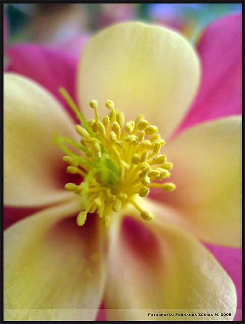 Amarillo patito by FeñyZ, via Flickr