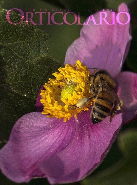 Api Cultura '(...) le piante hanno bisogno di aiuto per ricevere e inviare all'esterno messaggi e piccoli oggetti come il polline o i semi. Per questo hanno messo in piedi una specie di… sistema postale. Così a volte si affidano all'aria, altre all'acqua, ma più spesso usano come postini gli animali, soprattutto quando si tratta di incarichi molto delicati come la difesa o la riproduzione'. Stefano Mancuso Ph. Luigi Fieni #Orticolario2017 #ape #garden #gardening #nature #outdoor #bees #bee…