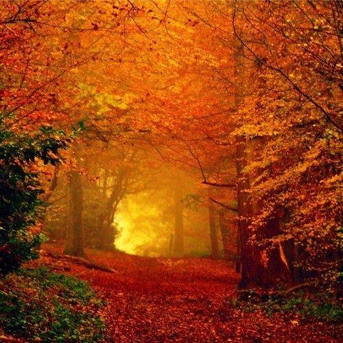 Autumn Glow, Romania #autumn