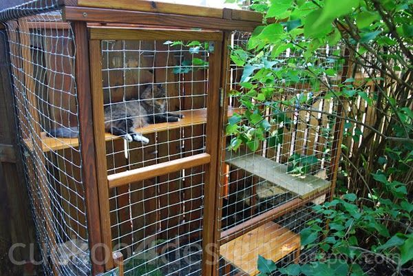 cat enjoying outdoor cat enclosures... they also have a wire tunnel along the top of the fence.