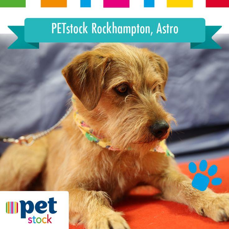Astro the PETstock Rockhampton winner