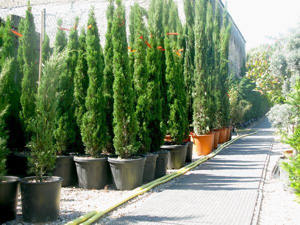 mediterrane pflanzen | modern decor | pinterest | modern, Gartenarbeit ideen