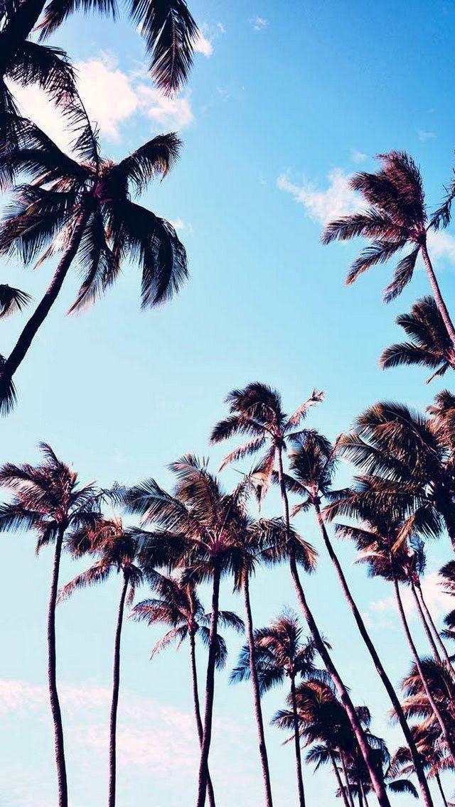 #Palms #iPhone #Wallpaper