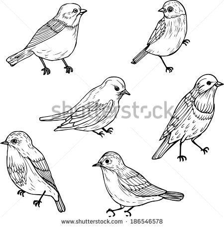 Bird Line Drawing Set of Line Drawings of Birds