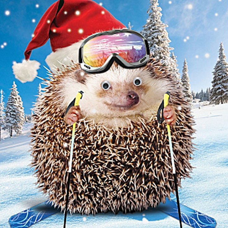 Hedgehog Skiing Santa Hat Christmas Card 3D Goggly Moving Eyes, Funny Xmas Card