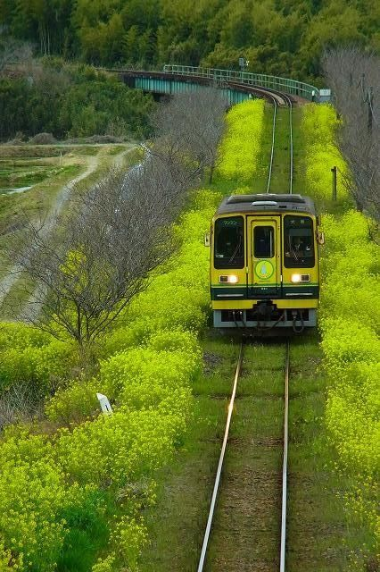Railways - Chiba, Japan……….LOVELY PICTURE OF TRAIN ROLLING THRU JAPAN…….LOOK AT THE GREEN GROWTH ALONG THE TRACKS…….ccp