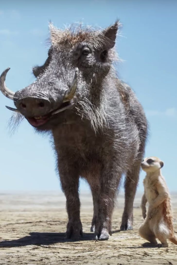 Timon And Pumbaa Save A Very Fluffy Young Simba In New
