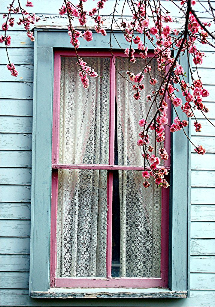 pink and aqua: lovely window framed in blossoms. love the lace curtains