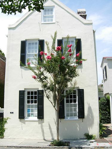 Charleston, SC on King St.  Crepe myrtle and sweet house.