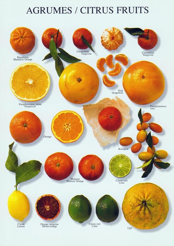 Plus de 1000 id es propos de la terre est bleue comme une orange sur pinterest pablo picasso - La mineuse des agrumes ...