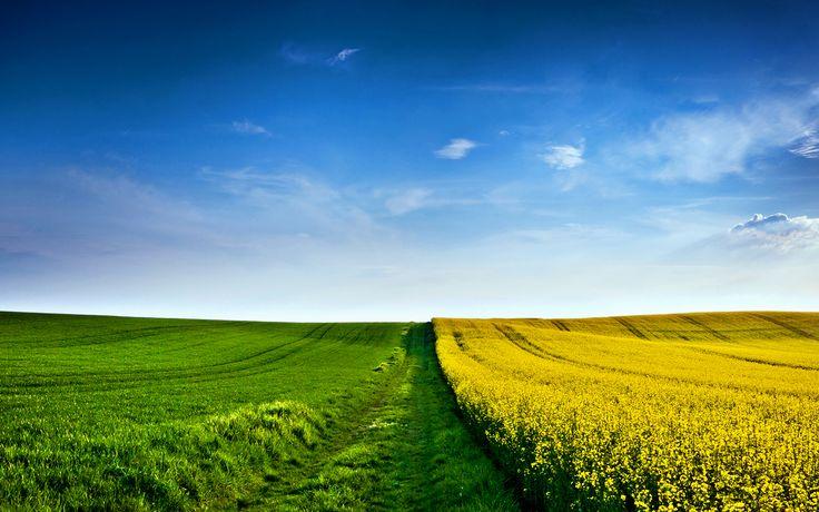 http://wallpaperuser.com/wp-content/uploads/2012/10/yellow-green-field-wallpaper.jpg