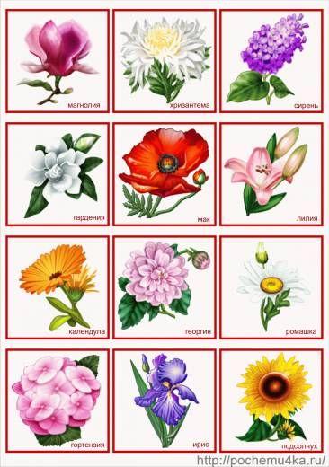 Картинки цветы на детские шкафчики в детском саду