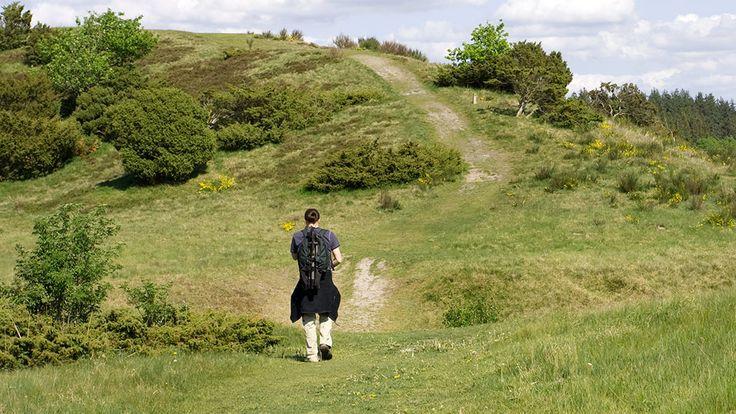 Nature walk leaflets (Vejle)