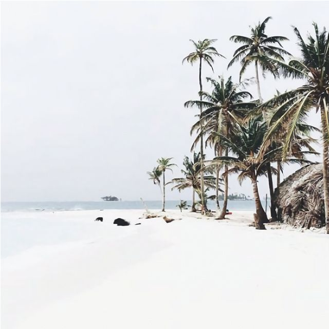 #Bali #palmtrees #beach #sand #soon #summer #lepetitcartel #inspiration