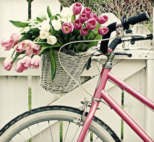 when i live at the beach, i'll have a pink bicycle with a basket, and bring home fresh flowers