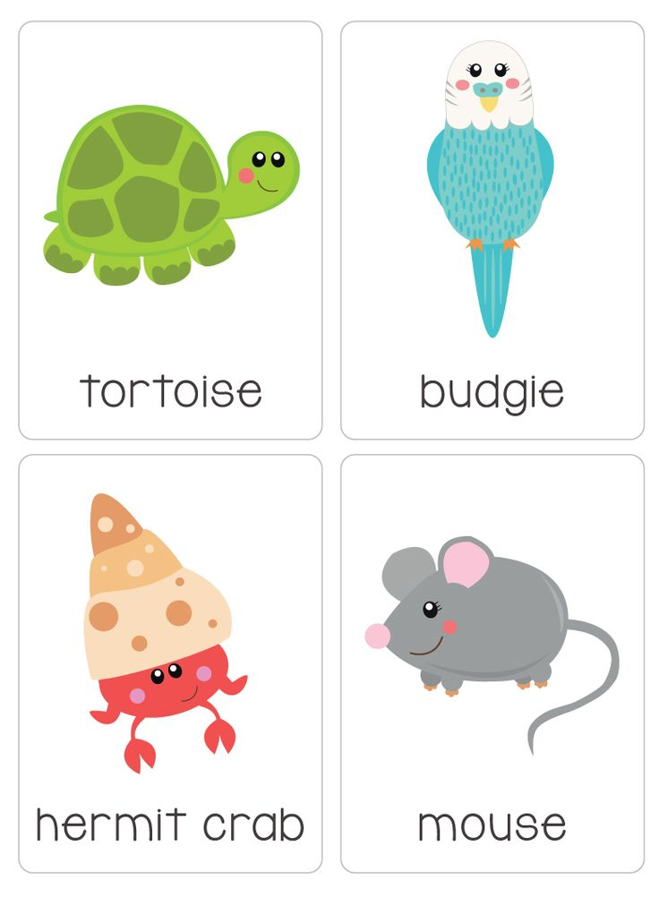 "Our set of printable ""My Pets Flash Cards"" are a great learning tool for early literacy and would be a great addition to a health unit. All brightly coloured and of high quality. There are 14 brightly coloured, high quality printable flash cards in this pack containing common pets such as guinea pig, cat, mouse, hamster etc."