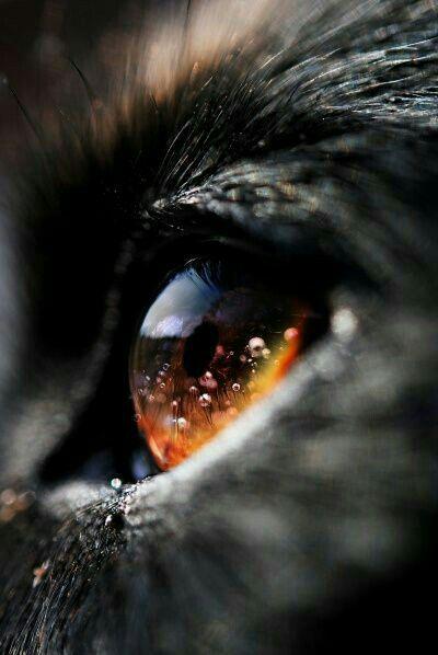 Orange Wolf eye