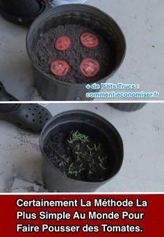 Cette méthode est si facile que vous obtiendrez plus de plants de tomates avec moitié moins de travail ! Aussi, dès aujourd'hui, si vous avez des tomates trop mûres à la maison, surtout ne les jetez pas !? Découvrez l'astuce ici : http://www.comment-economiser.fr/methode-la-plus-simple-au-monde-pour-faire-pousser-tomates.html?utm_content=bufferb202e&utm_medium=social&utm_source=pinterest.com&utm_campaign=buffer