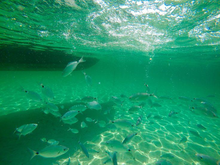#fish #sea #Sardegna