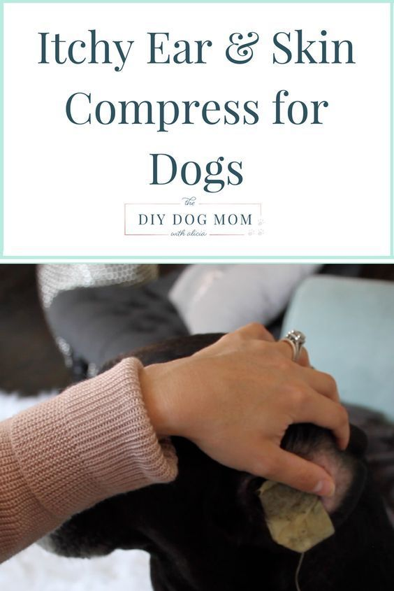 Ear & Skin Compress Home Remedy for Itchy Dogs | dog itchy skin remedy | dog skin remedy | dog ear infection | dog ear infection remedy | dog allergy remedy | dog itching remedies