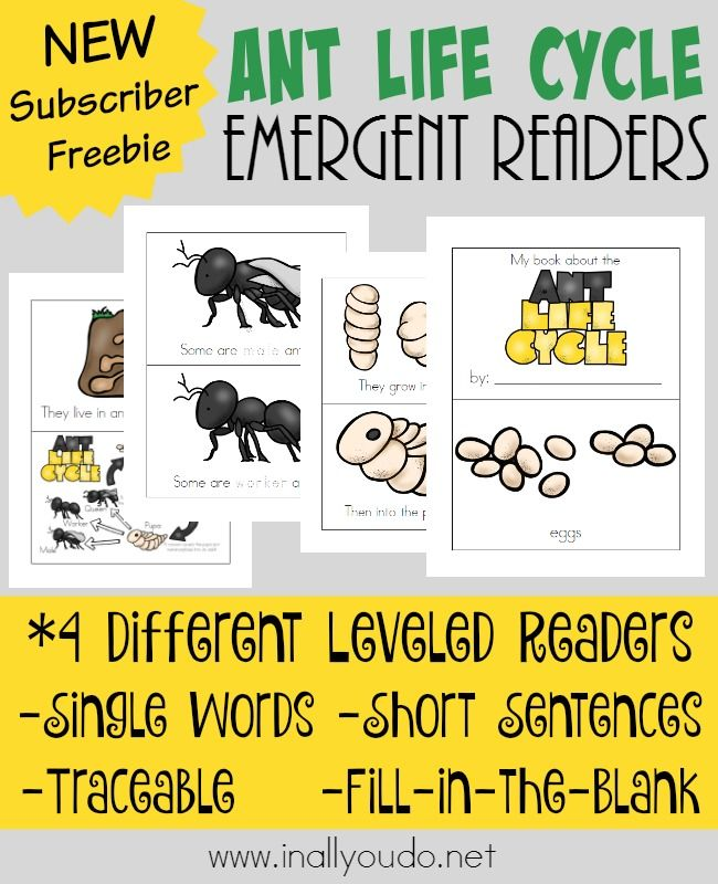 ant life cycle emergent readers reading skills ants and life cycles. Black Bedroom Furniture Sets. Home Design Ideas