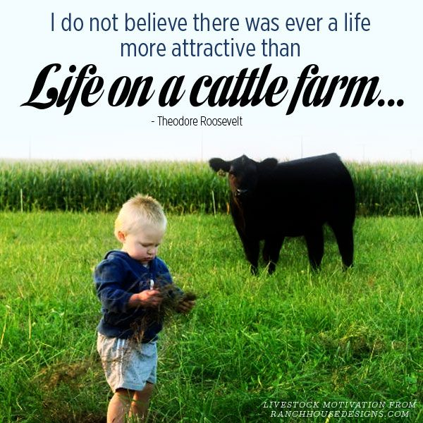 I do not believe there was ever a life more attractive than Life on a cattle farm. --Theodore Roosevelt  #quotes #Darigold #Farm